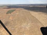 500 ha aerial seed